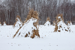 Cornstalks in the snow, stacked in the field by an Amish farmer in an Amish colony near Stanwood, Michigan, USA, December, Michigan_Amish-60