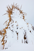Cornstalks in the snow, stacked in the field by an Amish farmer in an Amish colony near Stanwood, Michigan, USA, December, Michigan_Amish-61