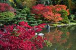 Brilliant autumn color along pond in Japanese Garden, Seattle, Washington State, USA, Japanese_Garden_Fall-907