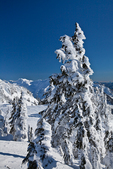 Conifers covered with rime ice at Artist Point, near the Mt. Baker Ski Area, Mt. Baker-Snoqualmie National Forest, North Cascade Mountains, Washington State, USA,  Artist_Point_Winter-141