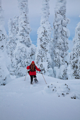 Snowshoer (Karen Rentz, spouse of photographer) in subalpine forest of trees thickly covered with rime ice , on Hurricane Ridge, Olympic National Park, Washington State, USA, Hurricane_Ridge_Winter-137
