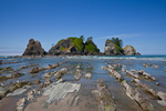 Low tide exposing more of the rocks at Point of Arches, Olympic National Park, Washington State, USA, June, Point_of_Arches-244