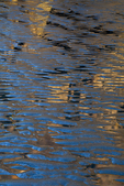 Rocks and blue sky reflected among water-filled ripples in the sand at low tide at Point of Arches in Olympic National Park, Washington State, USA, June, Point_of_Arches-281