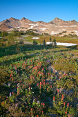 Late afternoon sunlight illuminating wildflowers in a subalpine meadow of the Goat Rocks Wilderness, Gifford Pinchot National Forest, Cascade Mountains, Washington State, USA, September, Goat_Rocks-425