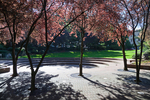 Beautiful park near City Hall in downtown Portland, Oregon, USA, Portland_Downtown-29