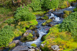 Small stream, which flows into Fryingpan Creek, in a high subalpine meadow along the Summerland Trail in Mount Rainier National Park, Washington State, USA, Mt_Rainier_Summerland-105