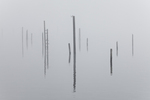 Posts in the mist along Hood Canal at Jorstad Creek, which are the remains of old log booming grounds of a logging operation done by the Buckhorn Mountain Logging Company from the 1950s into the 1970s, Washington State, USA, October, Olympic_Peninsula_Autumn-79