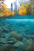 A split underwater and above water view of the North Fork Skokomish River in the Staircase area of Olympic National Park, in autumn, Washington State, USA, Olympic_Peninsula_Autumn-523