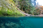 A split underwater and above water view of the North Fork Skokomish River in the Staircase area of Olympic National Park, in autumn, Washington State, USA, Olympic_Peninsula_Autumn-696