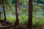 Trees at edge of Goat Lake in Glacier View Wilderness of Gifford Pinchot National Forest, Washington State, USA.