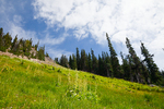 Subalpine meadow in Royal Basin, Olympic National Park, Washington State, USA.