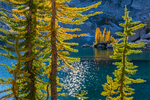 Backlit autumn Alpine Larch (aka Subalpine Larch and Lyall's Larch) (Larix lyallii) trees along Crystal Lake in The Enchantments, Cascade Range, Okanogan-Wenatchee National Forest, Washington State, USA