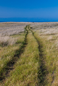 Old two-track dirt road crossing the high plateau in the area of Potato Harbor and Scorpion Canyon, Santa Cruz Island in Channel Islands National Park, California, USA.