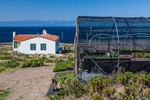 Native Anacapa Island plants growing in a nursery and greenhouse operation as part of a native plant revegetation project on East Anacapa Island, Channel Islands National Park, Callifornia, USA