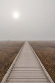 Laguna Point boardwalk in dense fog coming off the Pacific Ocean, with the sun peeking through, in MacKerricher State Park, near Fort Bragg, California, USA