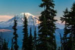 Mt. Rainier in morning light viewed in the distance from the Killen Creek area along the Pacific Crest Trail and Highline Trail on Mt. Adams, Mt. Adams Wilderness, Gifford Pinchot National Forest, Cascade Mountains, Washington State, USA