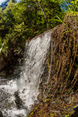 Waterfall created by a fallen log on a tributary of the Dosewallips River, Olympic National Forest, Olympic Mountains, Olympic Peninsula, Washington State, USA