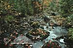 64776-00407 Stream in fall  Marquette Co.   MI