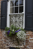 66512-00214 Window box with pansies, snapdragons, and allysum on brick building with blue shutters. Charleston, SC