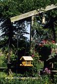 01712-02020 Backyard bird feeding area near deck, American Goldfinches on thistle feeder,  Marion Co.  IL