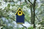 01715-023.11 Bird House Nest box in flowering Dogwood tree (Cornus florida) in spring Marion Co.  IL