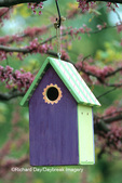 01715-02419 Bird house nest box in Eastern Redbud tree (Cercis candensis) in spring Marion Co.  IL