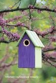 01715-02502 Bird house nest box in Eastern Redbud tree (Cercis candensis) in spring Marion Co.  IL