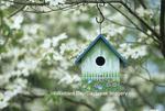 01715-02515  Bird house nest box in flowering Dogwood tree (Cornus florida) in spring Marion Co.  IL