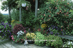 63821-09516 Container Garden on deck--- Pink Verbena, Purple Petunias, Yellow Outback Mini-Daisies, Varigated Nasturtiums, Salvias, Melampodium, Gold Flame Honeysuckle, Dusty Miller, Chicken Gizzard, Fuschia, Scented Geranium, & Hummingbird feeder Marion Co. IL