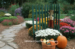 63821-122.02  Flower Garden in fall, green fence, mums, gourds in basket, pumpkin & stone path  Marion Co. IL