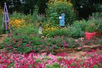 63821-185.03 Wave petunias, Homestead Purple Verbena, Lance-leaved Coreopsis, Nepeta, Salvias, Butterfly Bushes, Birdhouses, Obelisk,