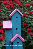 63821-187.13 Pink & blue bird house by Raspberry Wine Bee Balm (Monarda didyma)  Marion Co. IL
