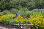 63821-23304 Flower gardens with old bicycle, Marion Co, IL (PR)