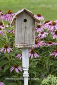 63821-23318 Birdhouse and Purple Coneflowers (Echinacea purpurea), Marion Co., IL