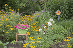 63821-23402 Flower garden with Black-eyed Susans (Rudbeckia hirta), Joe Pye Weed  (Eutrochium purpureum), Butterfly Bush, False Sunflowers, orange chair with petunia basket, and birdhouse, Marion Co., IL