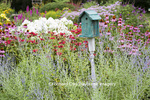 63821-23406 Blue birdhouse in flower garden with Russian Sage, Bee Balm, Purple Coneflowers and White Garden Phlox, Marion Co., IL