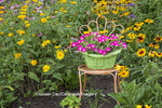 63821-23517 Orange chair with petunia basket in flower garden (Black-eyed Susans and False Sunflowers).  Marion Co., IL (PR)