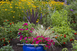63821-23515 Blue pot in flower garden (million bells, Black-eyed Susans, salvias, Red Spread Lantana).  Marion Co., IL (PR)