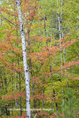 64776-01613 Fall color, Hiawatha National Forest, near Munising, MI