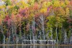 64776-01614 Fall color, Hiawatha National Forest, near Munising, MI