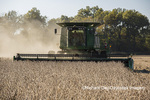 63801-07219 Soybean harvest with John Deere combine in Marion Co. IL