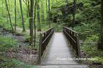 63895-14713 Trail bridge at Ferne Clyffe State Park, Johnson Co. IL