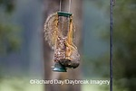 02013-008.01 Fox Squirrel (Sciurus niger) on peanut feeder, Marion Co.  IL