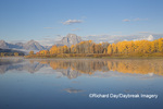 67545-09306 Sunrise at Oxbow Bend in fall; Grand Teton National Park; WY