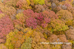 63876-02314 Aerial view of fall color trees Stephen A. Forbes State Park Marion Co. IL
