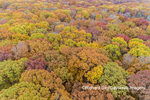 63876-02519 Aerial view of fall color trees Stephen A. Forbes State Park Marion Co. IL