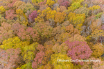 63876-02604 Aerial view of fall color trees Stephen A. Forbes State Park Marion Co. IL