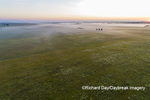 63893-03607 Sunrise over prairie with fog aerial view Marion Co. IL