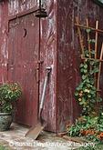 63821-173.14 Outhouse Garden Shed Nasturtium tropaeoium majus & Thunbergia Lemon Star, Profusion Fire Zinnia, Fire Bush Hamelia patens IL
