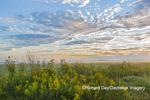 63893-03710 Sunrise and prairie Prairie Ridge State Natural Area Marion Co. IL